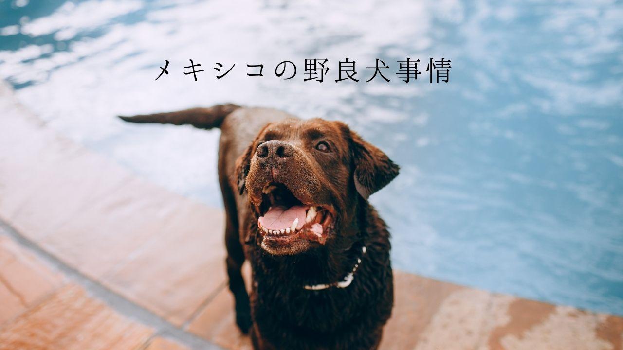 メキシコ 野良犬 保護犬 犬を飼う 犬