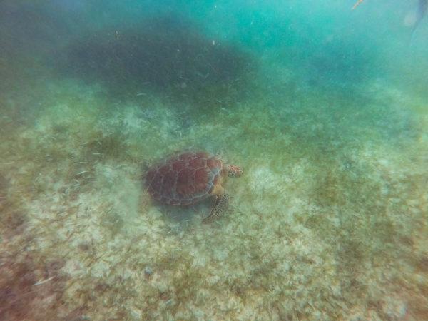 エコリゾート サステイナブル 持続可能 エコ旅行 カンクン ヴィーガン ウミガメ アクマル