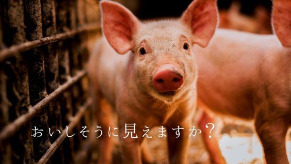 人間 草食動物 肉食動物 ヴィーガン