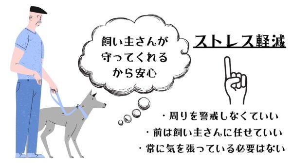 犬 飼い主 上下関係 ハームスプレンガー 首輪 散歩